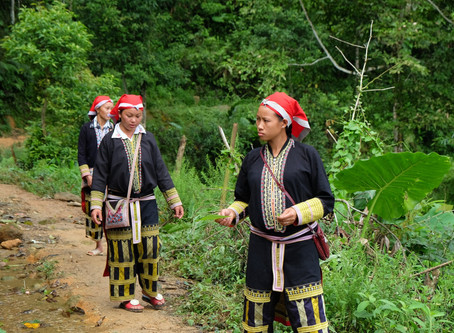 Reflecting on the linkages between REDD+, Forest Tenure and Indigenous Peoples' Rights: Encourag