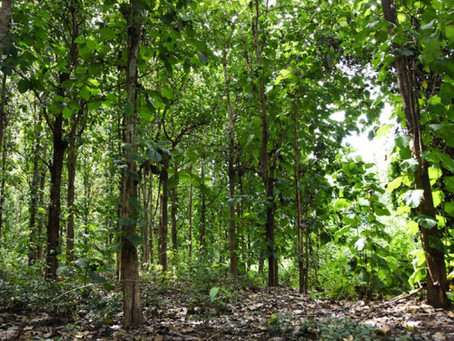 Forests: The Unsung Heroes