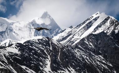 EAGLE MID-FLIGHT
