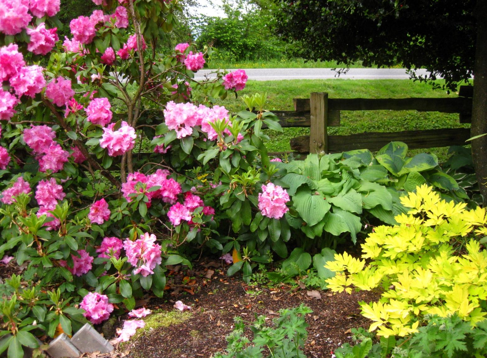 in the garden (4)