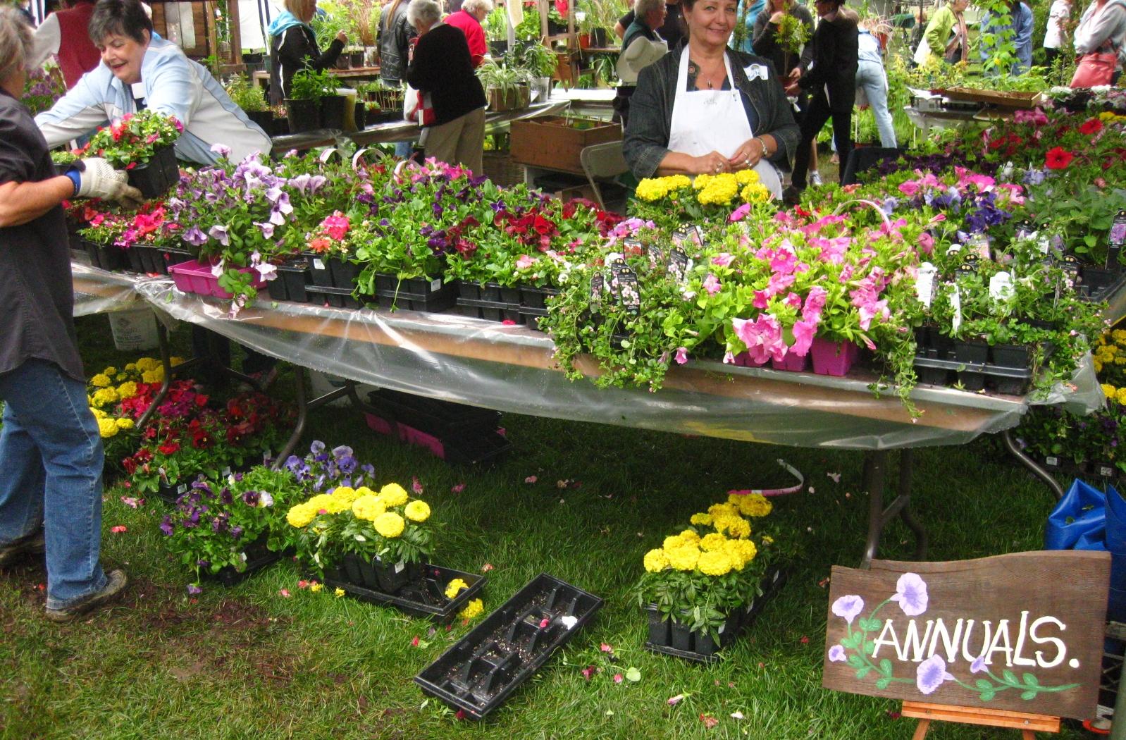 Add colour to your summer garden