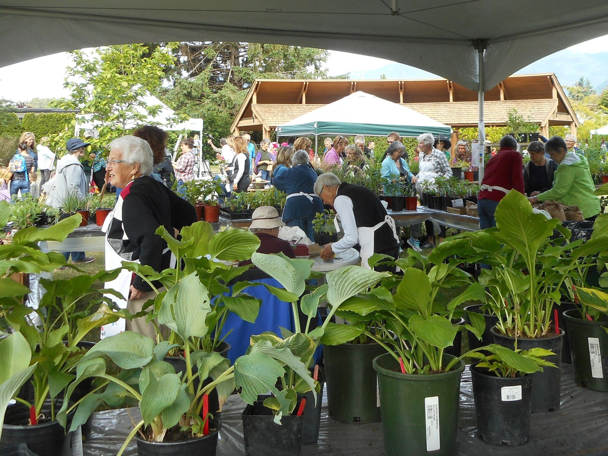 GVP plant sale 2018 (11)_preview