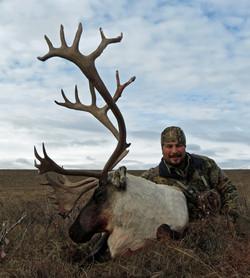 Arctic Caribout 3
