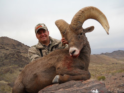 frank_cole_desert_sheep_consultant_the_d