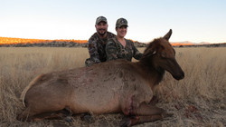 Wife_s second cow elk