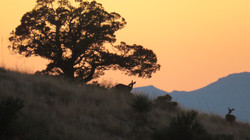Coues sunset