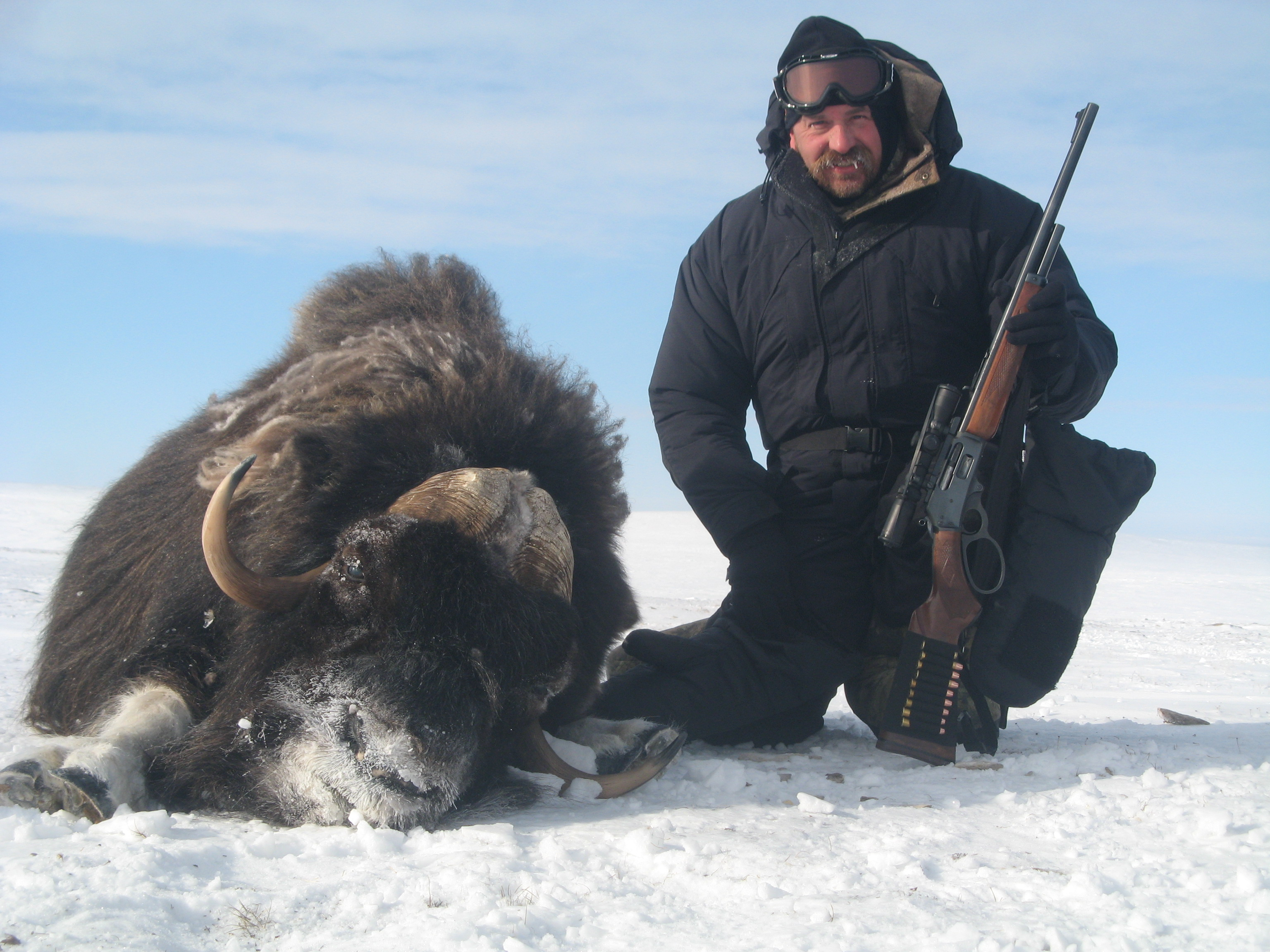 frank_cole_muskox_consultant_the_draw