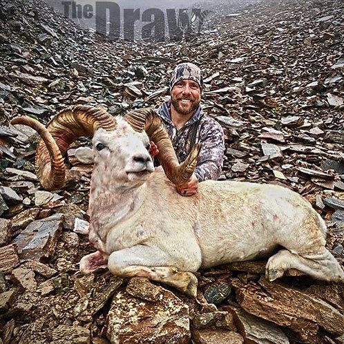 Best dall sheep hunting in Alaska