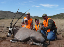 Oryx Trophy Cow  Major