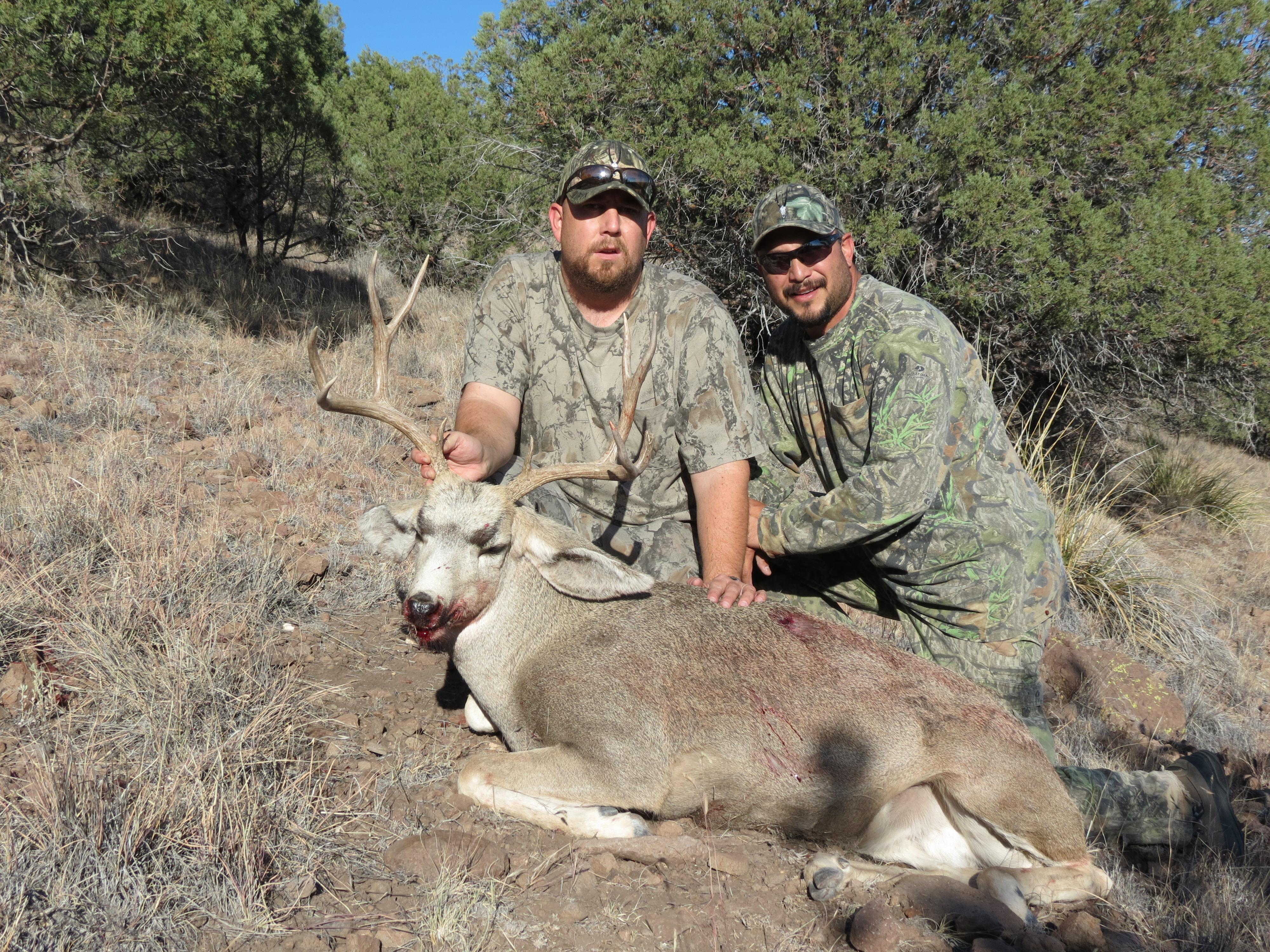 Deer David