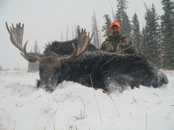frank_cole_moose_consultant_the_draw