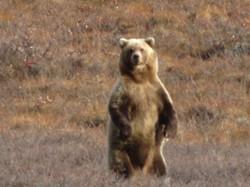 Arctic Grizz 175yrds