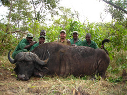 frank_cole_cape_buffalo_consultant_the_d