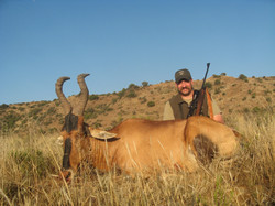 frank_cole_red_hartebeest_consultant_the