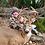 Thumbnail: Trophy Whitetails in Kansas