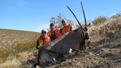 Oryx Bow kill