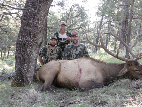Why applying for Wyoming and New Mexico are the best for Elk hunting