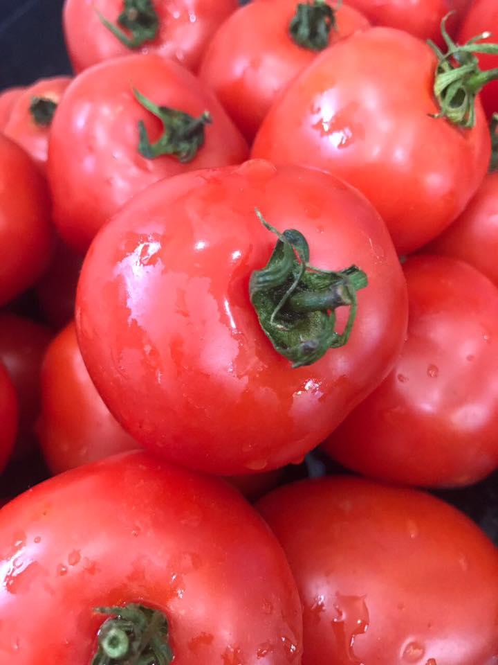 Tomates Orgânicos para o molho