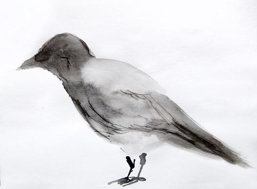 ptak7.jpg
