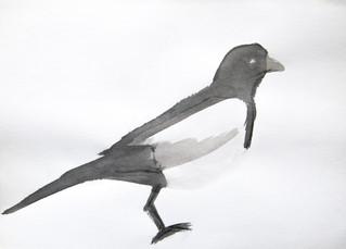 ptak2.jpg