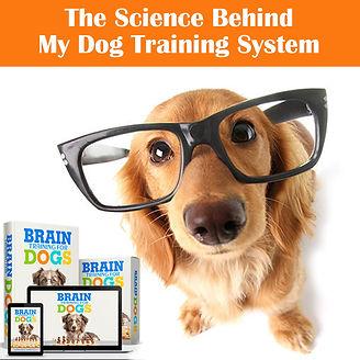 dog brain training class.jpg
