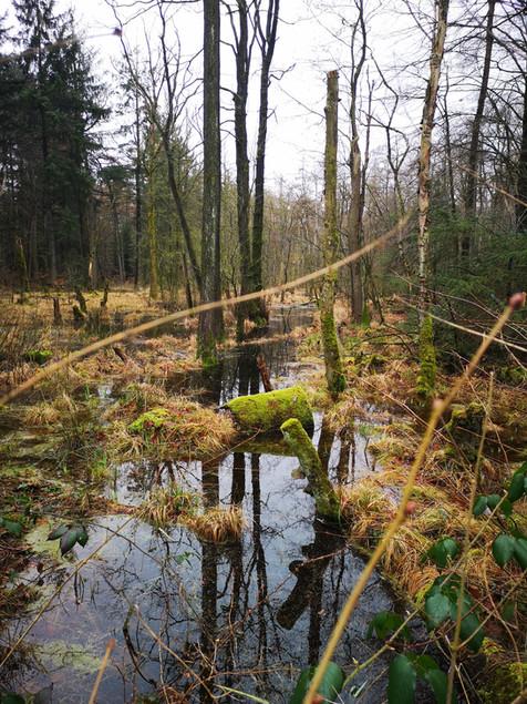 Waldschlössen Schleswig
