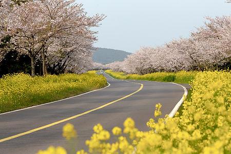 봄 이미지.jpg