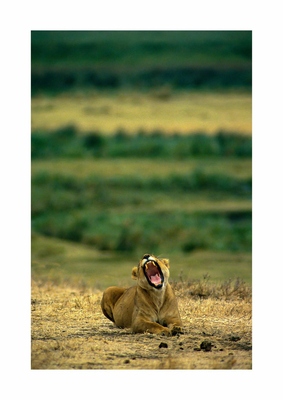 roaring.jpg