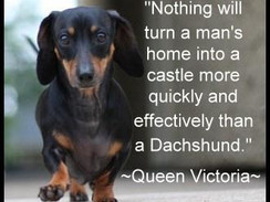 Just how mad about Dachshunds are you?