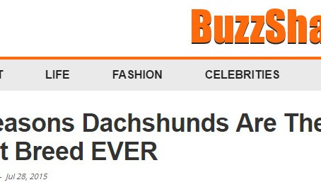 Dachshunds are the worst breed EVER!