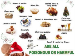 Seasonal Christmas foods that are harmful or dangerous to dogs