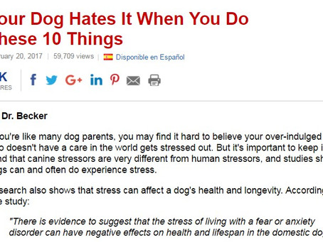 Common Stress Triggers in Dogs and How to Avoid Them