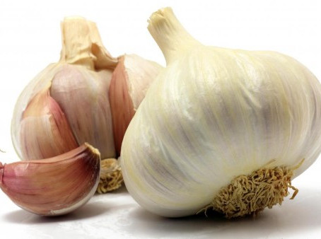Garlic for Dogs: the Great Myth - Busted