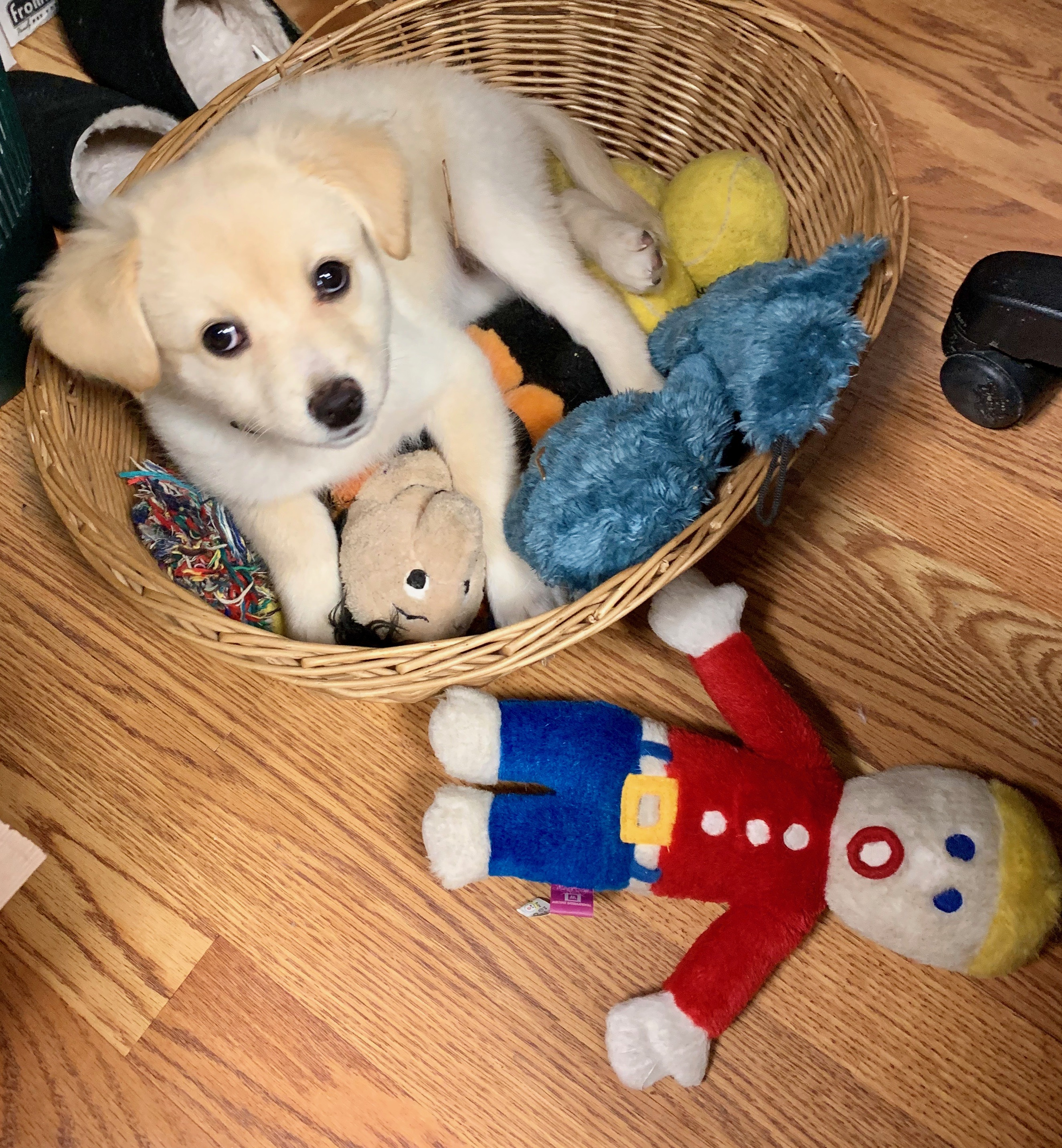This toy basket is COOL!
