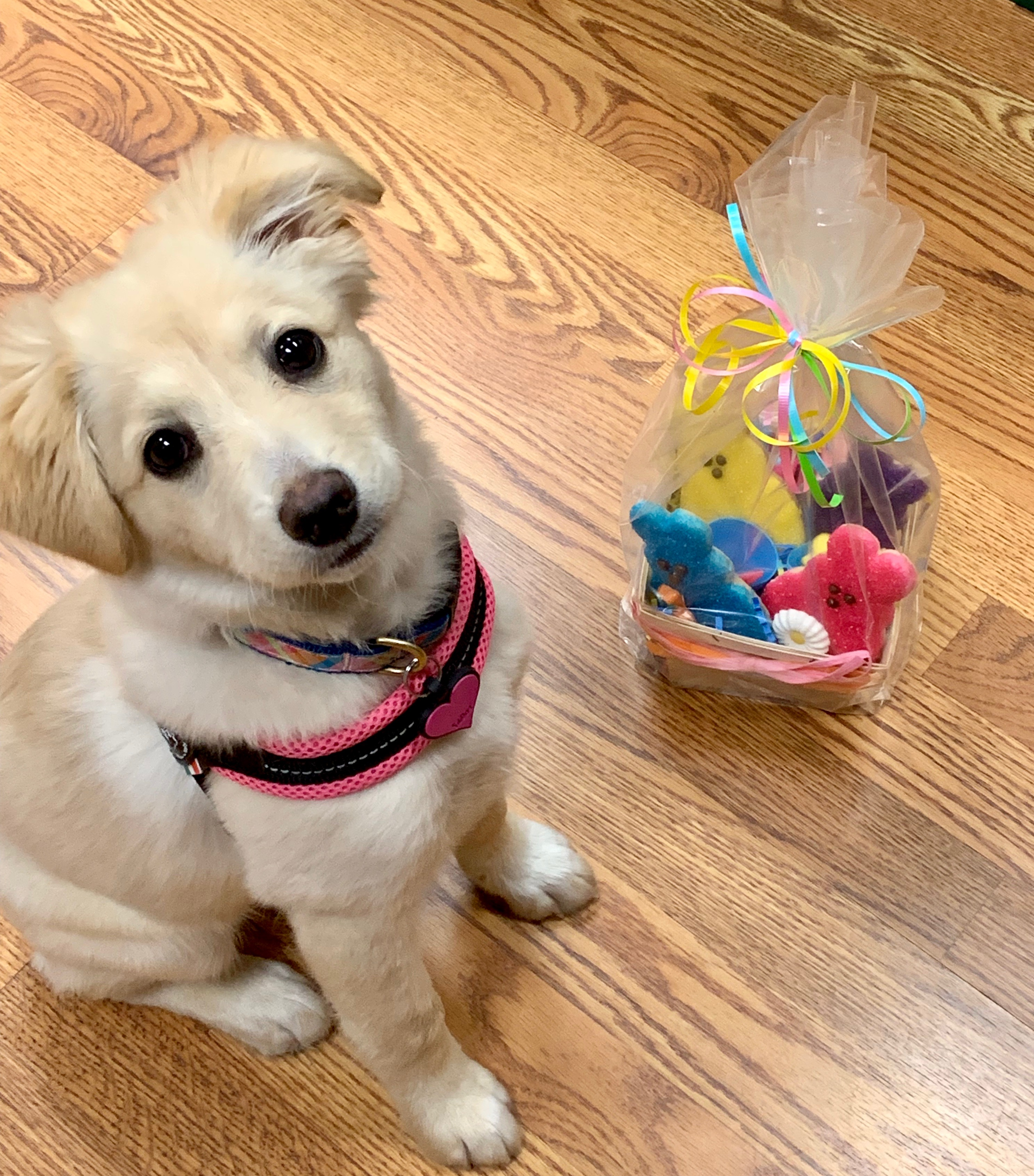 I got my first Easter Basket this year!