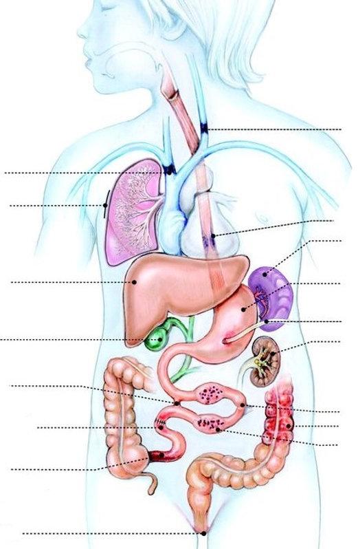 Short Bowel Syndrome 3.jpg