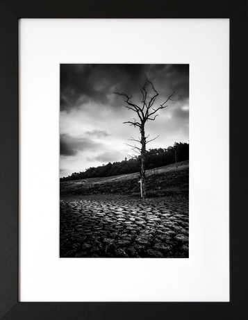 L'arbre de guerlédan