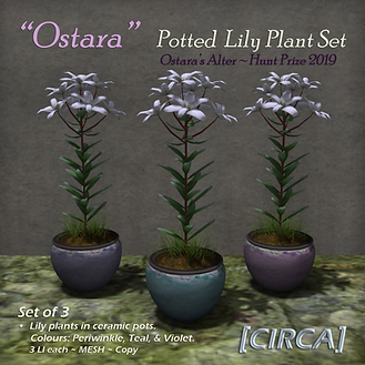[CIRCA] - _Ostara_ - Potted Lily Plant S