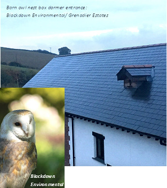 Barn Owl nest box dormer entrance - Blackdown Environmental