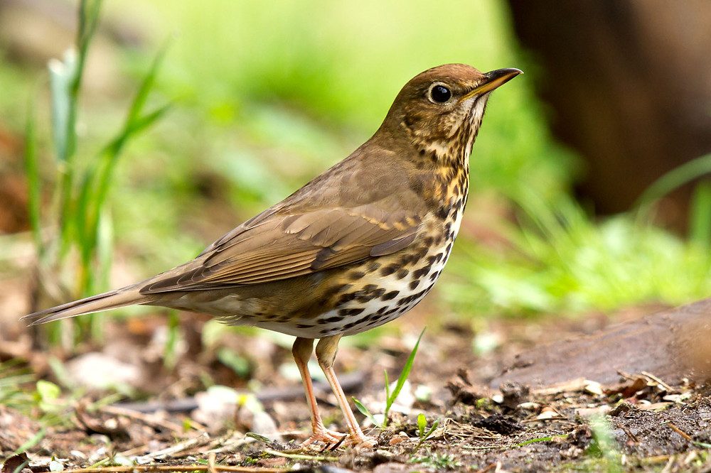 Garden Birds - Research has shown that contact with nature, including common garden birds, can improve well-being.