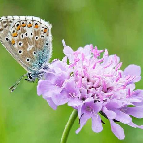 Mandatory net biodiversity gain – a paradigm shift for development?