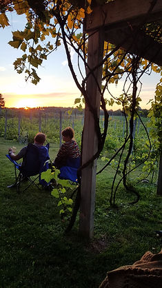 Couple sitting by the vines