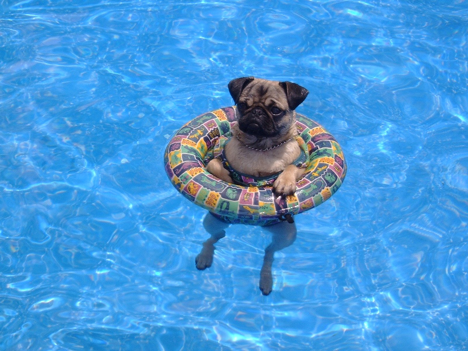Pool Therapy for Family Pets...