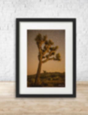 Fine art astrophotography print of stars over Joshua Tree National Park - by Arthur Cauty