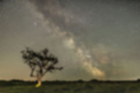 Dartmoor Tree Milky Way