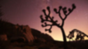 Joshua Tree Nightscape