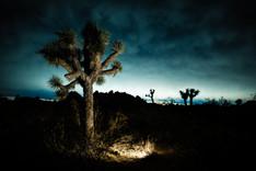 Night in Mojave