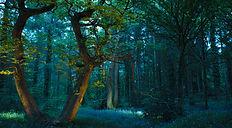 lords woods.jpg