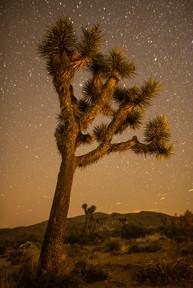 Joshua Tree Starscape