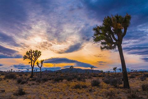 Josha Tree Sunset